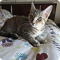 Adopt A Pet :: Ariel - Phoenix, AZ