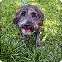 Adopt A Pet :: Trixie - courtesy post - Glastonbury, CT