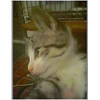 Adopt A Pet :: Dapper Dan - Owasso, OK