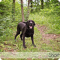 Adopt A Pet :: Shorty - Lewisville, IN