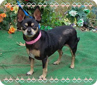 Chihuahua Mix Dog for adoption in Marietta, Georgia - TANDEE