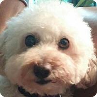 Adopt A Pet :: Skippy - La Costa, CA