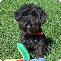 Adopt A Pet :: Razzie - Mocksville, NC