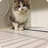 Adopt A Pet :: Peek - Hamilton, ON