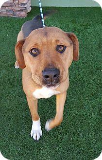 Shepherd (Unknown Type) Mix Dog for adoption in Las Vegas, Nevada - June Bug