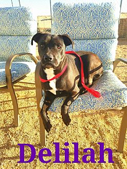 Terrier (Unknown Type, Medium) Mix Dog for adoption in California City, California - Delilah