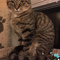 Adopt A Pet :: Lexi - Middletown, OH