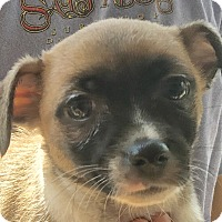 Adopt A Pet :: Tues - Harmony, Glocester, RI