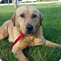 Adopt A Pet :: Joe Perry - New Canaan, CT