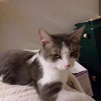 Adopt A Pet :: Winston - Flint, MI