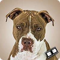Adopt A Pet :: Riley - Prescott, AZ