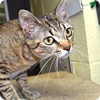 Adopt A Pet :: Scarlett - Wheaton, IL