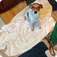 Adopt A Pet :: Pixie Dust - Ashland, KY
