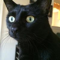 Adopt A Pet :: GILL - McDonough, GA