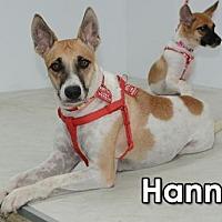 Adopt A Pet :: Hannah Moon - Seattle, WA