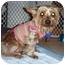 Photo 1 - Yorkie, Yorkshire Terrier Mix Dog for adoption in Fairfax, Virginia - Lena
