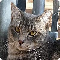 Adopt A Pet :: Shye - Las Cruces, NM