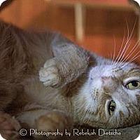 Adopt A Pet :: Jed - Byron Center, MI