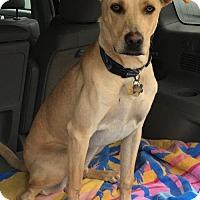 Adopt A Pet :: Finn (Spruce) - Seahurst, WA