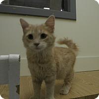 Adopt A Pet :: July - Milwaukee, WI
