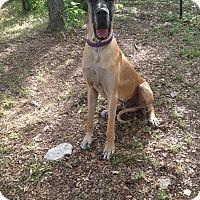 Adopt A Pet :: Crockett - Austin, TX