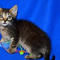 Adopt A Pet :: Petey - Buford, GA