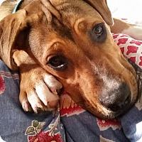 Adopt A Pet :: Arlo - Livonia, MI