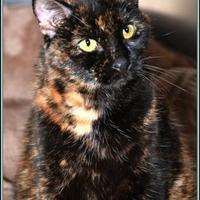 Adopt A Pet :: Lulu - Frederick, MD