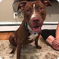 Adopt A Pet :: Phoenix - Parsippany, NJ