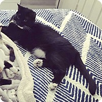 Adopt A Pet :: Ellie Mae - Chandler, AZ