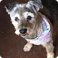 Adopt A Pet :: Rachel - Boerne, TX