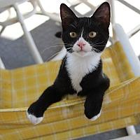 Adopt A Pet :: Gomez - Winchester, VA