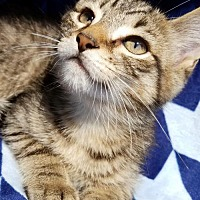 Adopt A Pet :: Harrison - Hornell, NY
