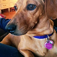Adopt A Pet :: Laura in WI - Columbia, TN