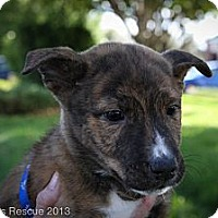 Adopt A Pet :: Patter - Broomfield, CO