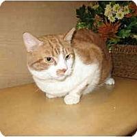 Adopt A Pet :: Goldie - Jenkintown, PA