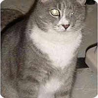 Adopt A Pet :: Q-tip and Clops - Chesapeake, VA