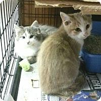 Adopt A Pet :: Rafaela and Norman - Whitestone, NY