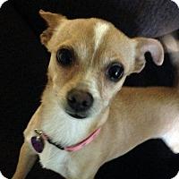 Adopt A Pet :: Boop - Los Angeles, CA