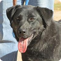 Adopt A Pet :: Echo - Greeley, CO