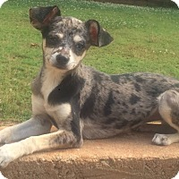 Adopt A Pet :: Kelly - Smyrna, GA