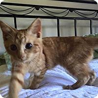 Adopt A Pet :: Stevie - Loveland, CO
