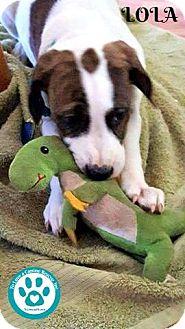 Hound (Unknown Type) Mix Puppy for adoption in Kimberton, Pennsylvania - Lola