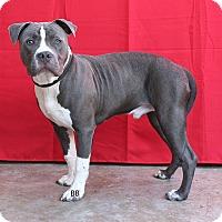 Adopt A Pet :: Digby - Santa Barbara, CA