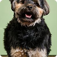 Adopt A Pet :: Gambit - Owensboro, KY