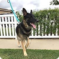 Adopt A Pet :: Bandit - Downey, CA