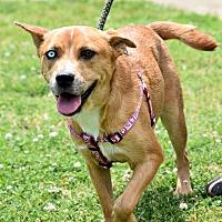 Adopt A Pet :: Angel - Memphis, TN