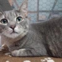 Adopt A Pet :: Sweet Pea - Metairie, LA