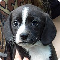 Adopt A Pet :: Finley (3 lb) Video - Twinsburg, OH