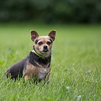 Adopt A Pet :: Emily - Drumbo, ON